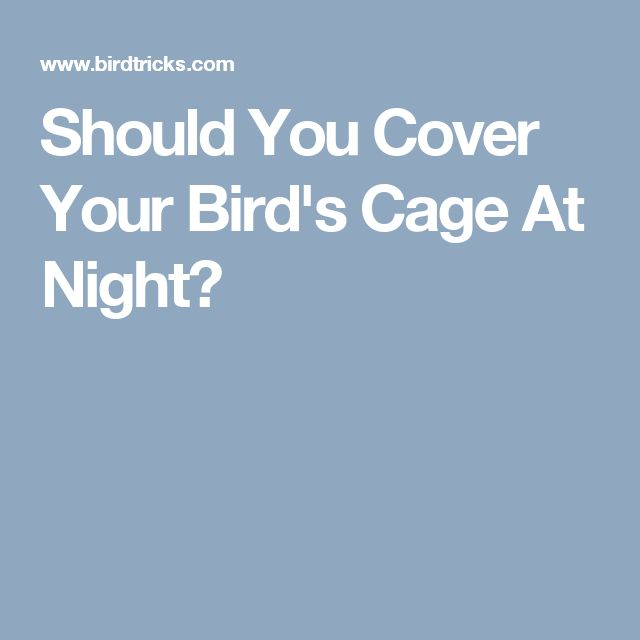 Should You Cover Your Bird's Cage At Night?