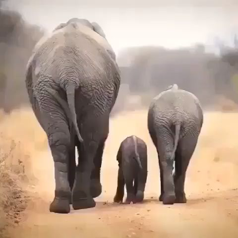 Check out this beautiful elephant family by @wildi…