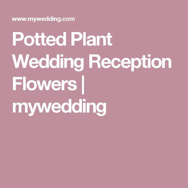 Potted Plant Wedding Reception Flowers | mywedding
