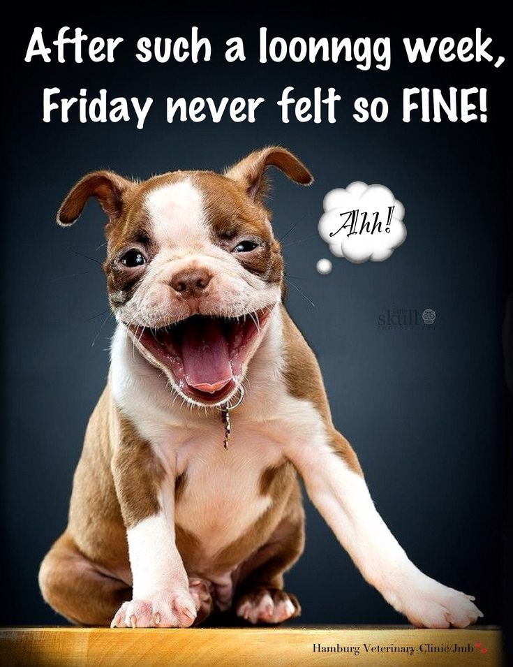 Friday Humor: Smile! Dog Funny - Long week!  After such a long week, Friday never felt so fine. Happy Friday, friends!