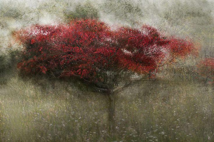 Impressionist photography-Cristina Runcan