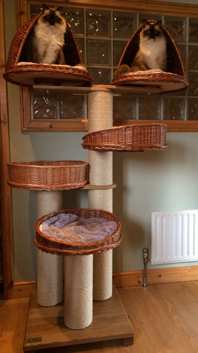 First time on our Tigga Towers tower designed by myself and my husband at the National Pet Show September 2014