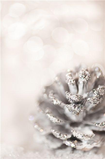 White. Silver. Tops. Pine Cone.