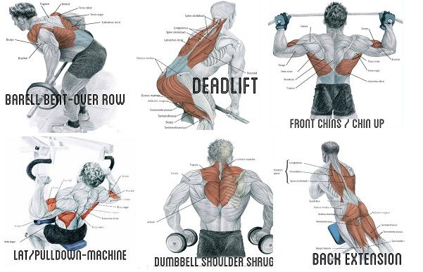 Exercise to Build Big Back Muscles | back | Back muscles ...