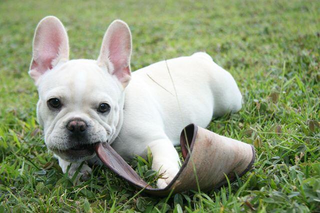 Los perritos se convierten en parte de la familia. Hasta tienen su propia personalidades #feliz