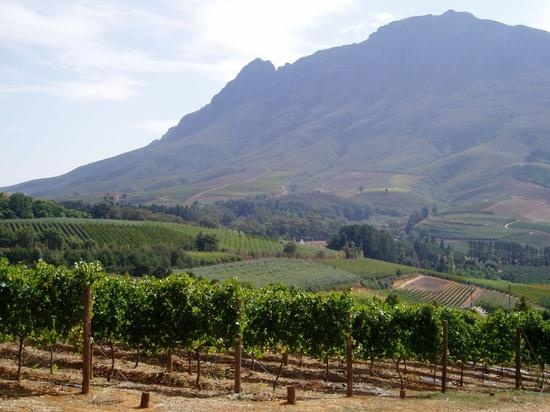 Stellenbosch Vineyard   Durban, South Africa!