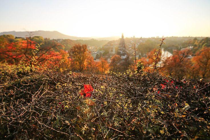 Ausflugstipps, Wanderungen, Sehenswürdigkeiten im Kanton Bern