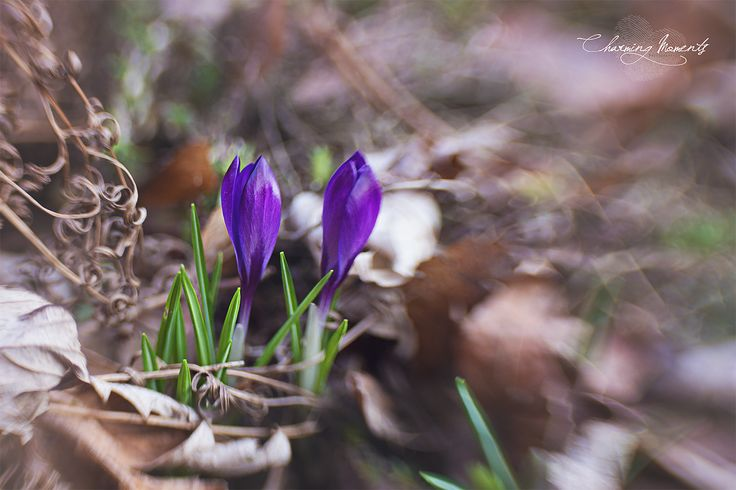 #spring #nature #photography #lensbaby