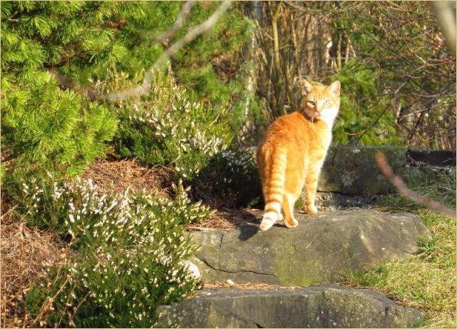 9 Durchschnittlich Katzen Vertreiben Garten Katzen Graser Im Garten Vertreiben