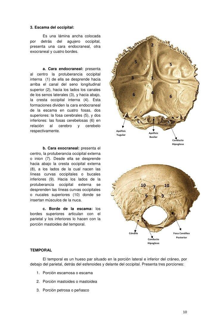 Mejores 44 imágenes de Anatomía cuerpo humano en Pinterest   Cuerpo ...