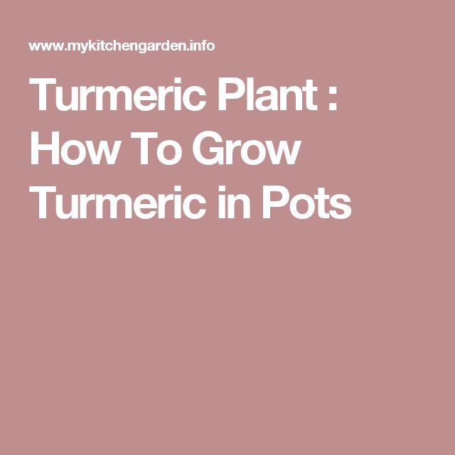 Turmeric Plant : How To Grow Turmeric in Pots