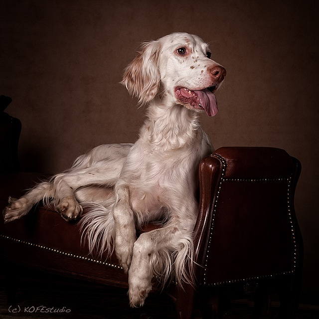 "Love these ""formal portraits"" from KOFE Studio."