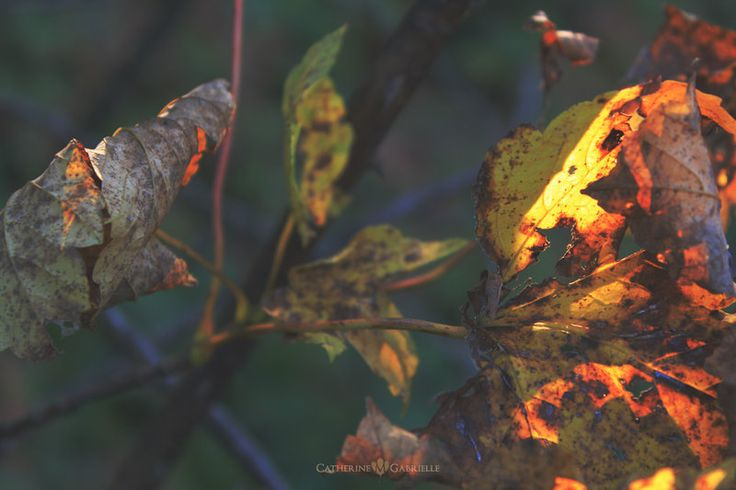 Beauty of Autumn III by firepaved   #PolskaMalowana #fotografia #photography #autumn #fall #jesień #liść #liście #leaf #leaves #nature #natura