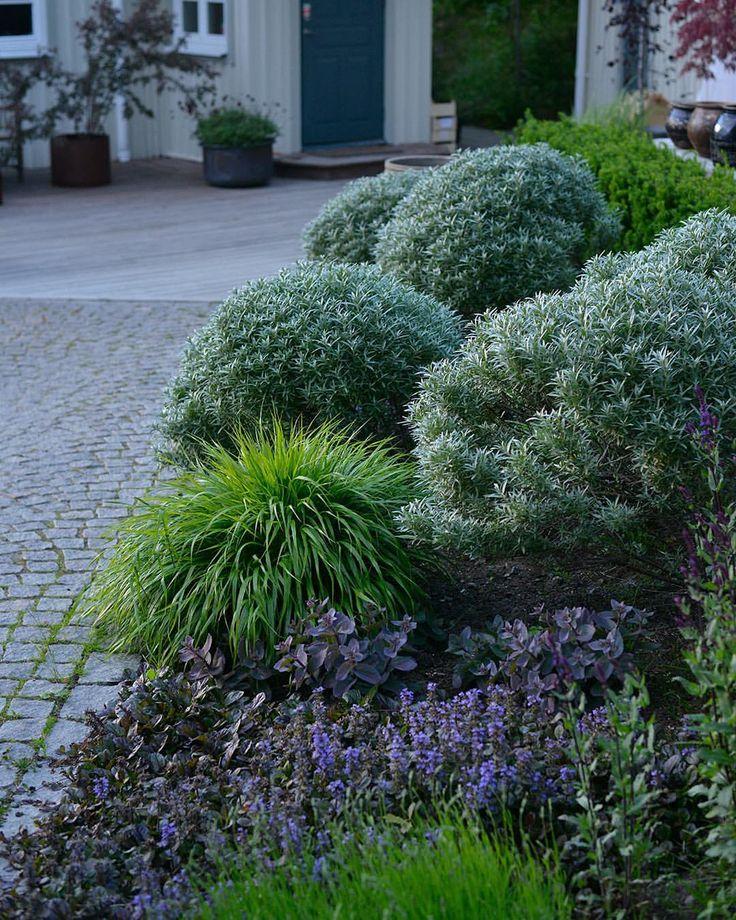 """4,286 gilla-markeringar, 59 kommentarer - Victoria Skoglund (@victoriaskoglund) på Instagram: """"Klippta havtornsklot 'Hikul', rödbladig revsuga ( lätt invasiv), hakonegräs, Lavendel 'Dwarf blue',…"""""""