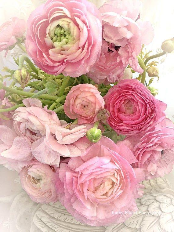 Ranunculus Flowers Pink Floral Prints Shabby Chic Decor Pink Flower Photos Romantic Spring Ranun In 2020 Pink Flower Photos Ranunculus Flowers Pink Flowers
