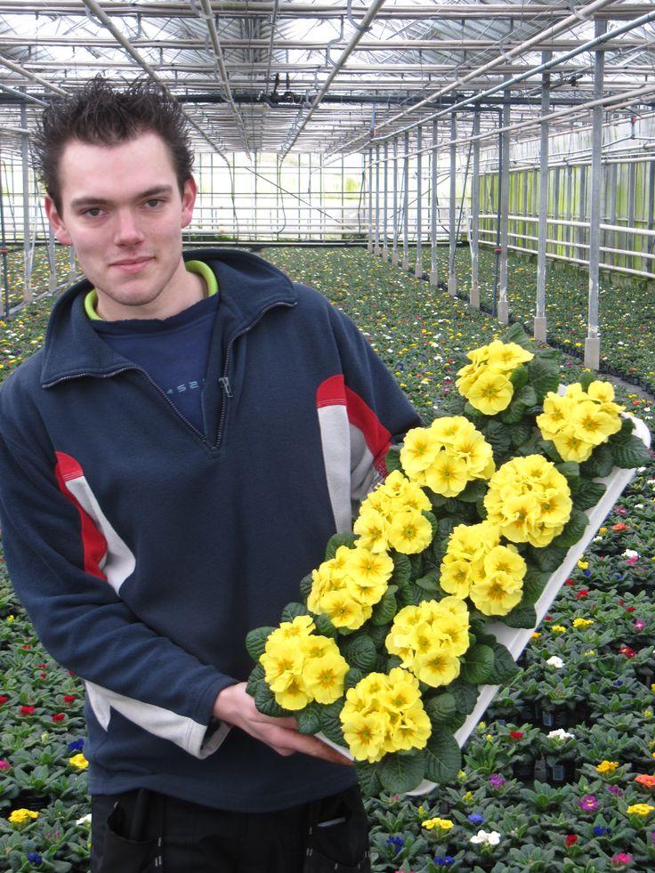 Cyril Scheffers met Primula Paradiso http://floraxchange.nl/Account/Kweker/976/Kwekerij-Aad-Scheffers