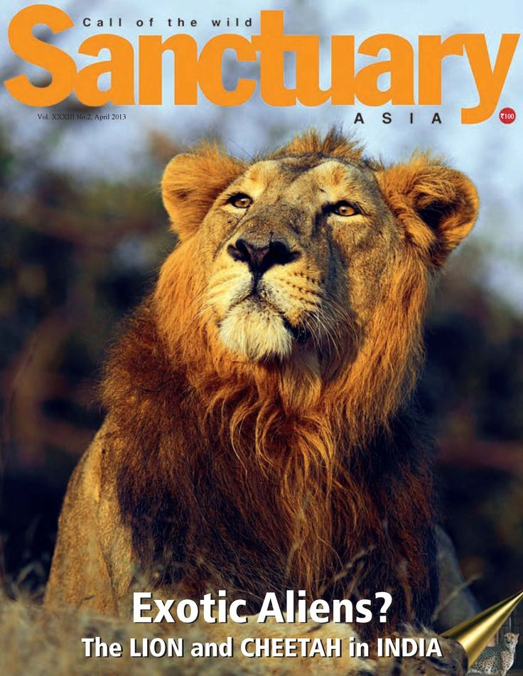 Sanctuary Asia  Magazine - Buy, Subscribe, Download and Read Sanctuary Asia on your iPad, iPhone, iPod Touch, Android and on the web only through Magzter