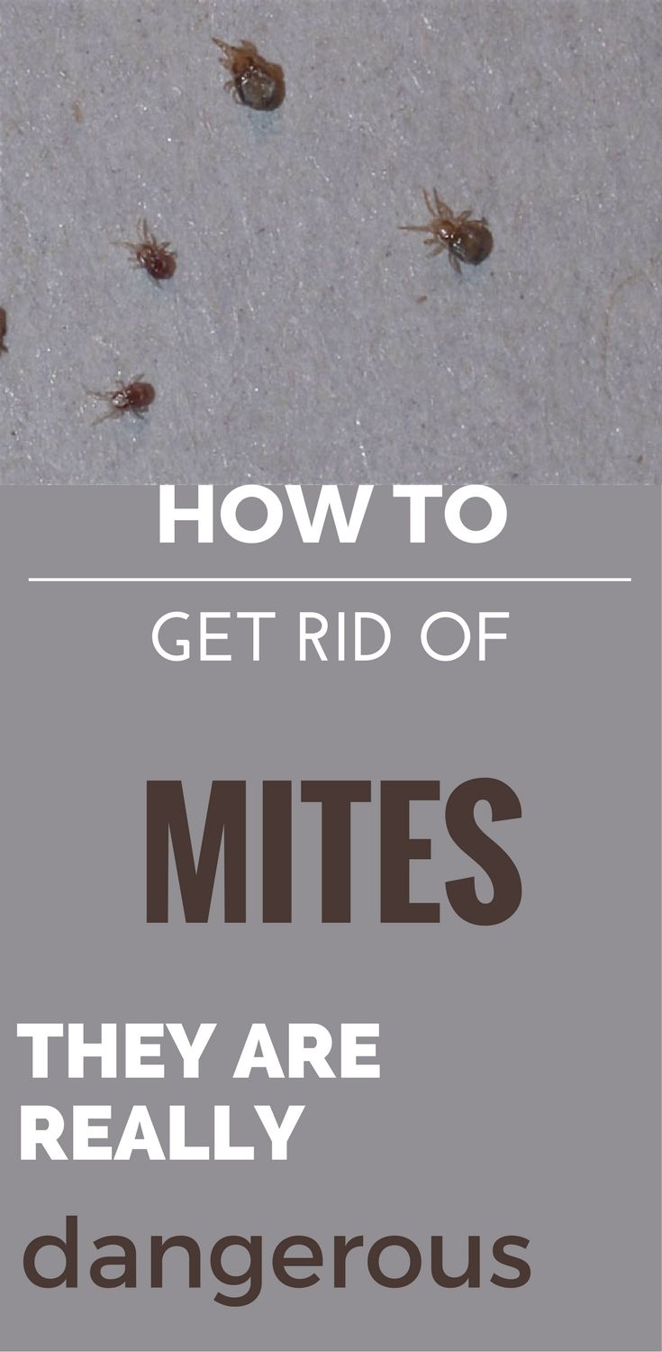 Get rid of skin mites on dogs Also known as fur mites, skin mites on dogs are the bane of your dog's existence. When looked at closely enough, these insects can be seen by the naked eye.