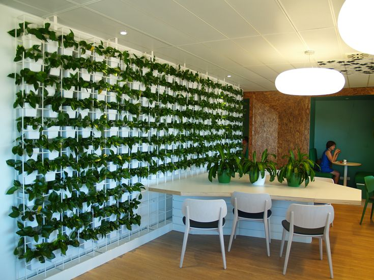 vertical garden with office plants