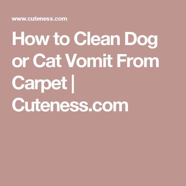 How To Clean Dog Or Cat Vomit From Carpet