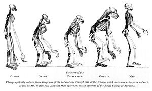 On the Origin of Species by Charles Darwin.  Hard reading and yes have started it several times but have yet to finish it though I really do need to because of its awesome effect on our knowledge of life and perspective.
