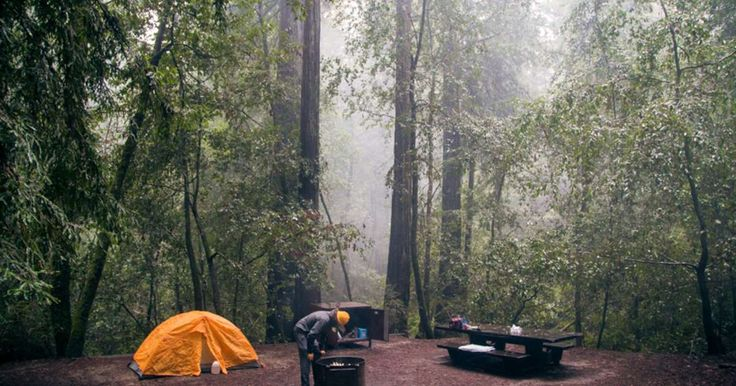 "Huckleberry Campground in Big Basin Redwoods, California | As Doc Holiday says, ""I'll be your Huckleberry. "" While he most likely wasn't referring to this Big Basin camping..."
