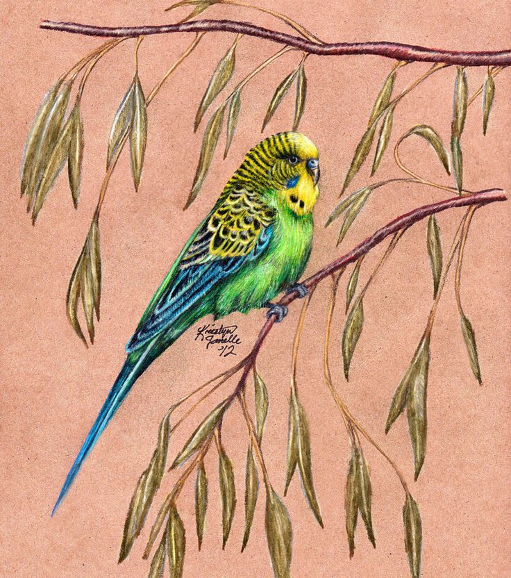 рисунок попугаев как живые это