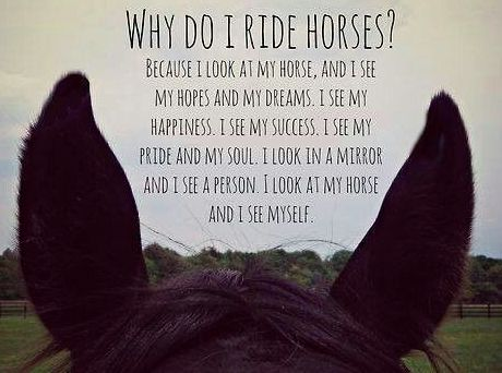 Best 25+ Horse love quotes ideas on Pinterest | Horse girl ...
