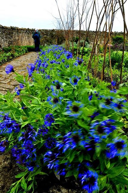 Gertrude Jekyll Garden Holy Island England Gardeners That Inspire Me Pinterest