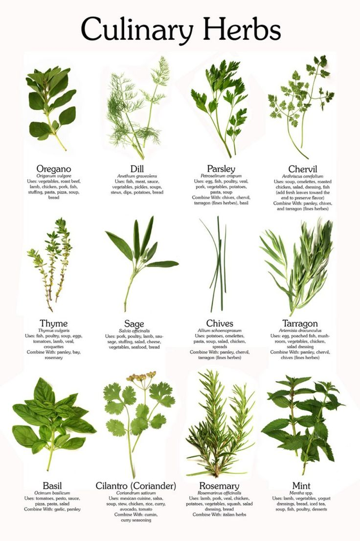 Fresh herbs guide - helpful for navigating our herb garden this summer!