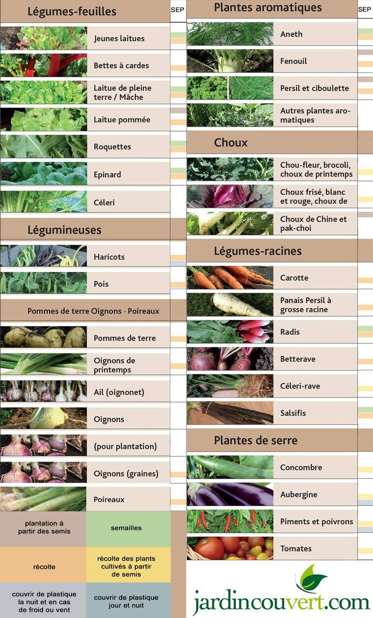 Les 16 meilleures images du tableau Conseils jardinage sous serre ou en plein champ sur ...