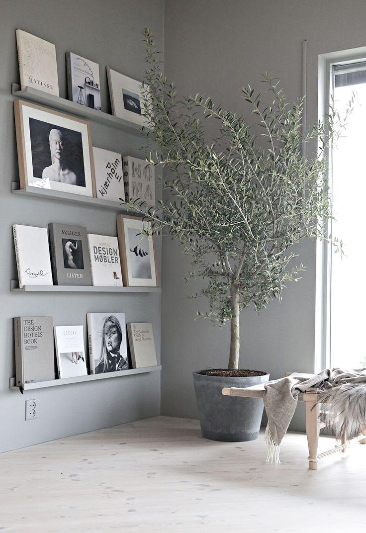 Grote plant in woonkamer en wandplankjes.