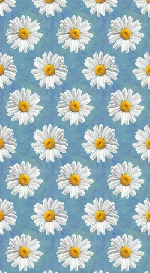 Daisy Wallpaper ! #wallpaper #background
