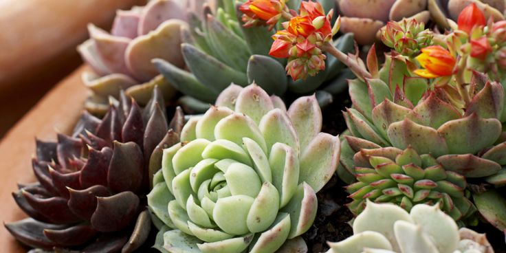 11 best images about house plants that could survive me on for How much sunlight do succulents need