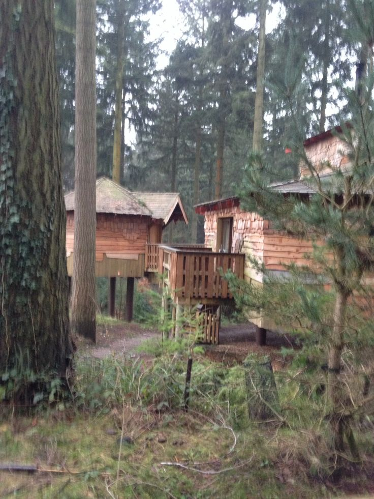 Treehouse Centre Parcs Longleat Forest