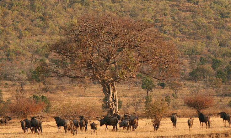 Makweti Safari Lodge, Welgevonden Game Reserve