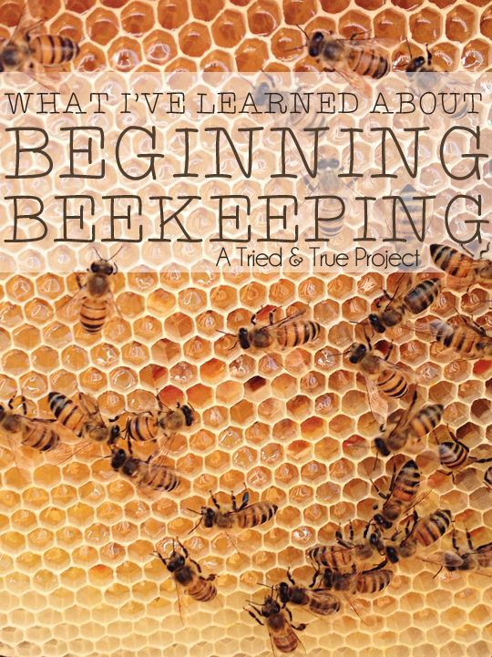What I've Learned About Beginning Beekeeping - I'd like to have my own bees at some point.