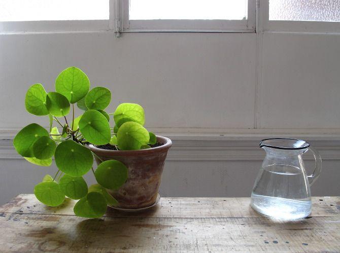 simple plants—mieke verbijlen