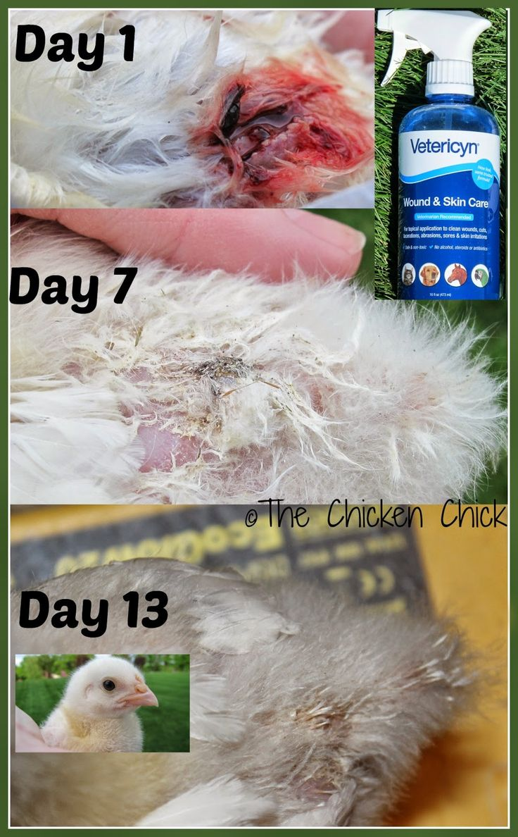 Chicken First Aid Kit- Vetericyn is an amazing product and you should be able to get it a farmers supply stores or places like Tractor Supply