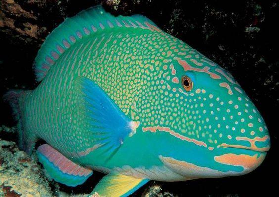 M s de 1000 ideas sobre peces de agua dulce en pinterest for Mejores peces agua fria