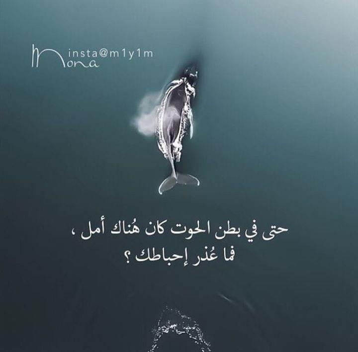 حتى في بطن الحوت كا هناك أمل فنا عذر إحباطك Arabic Quotes Postive Quotes Islam Facts