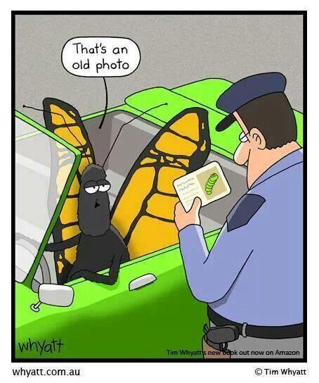 手机壳定制air structure triax  ndtv Butterfly License check