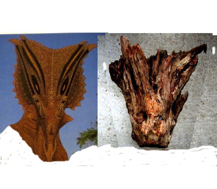 Chasmosaurus skull recovered compared to the artists
