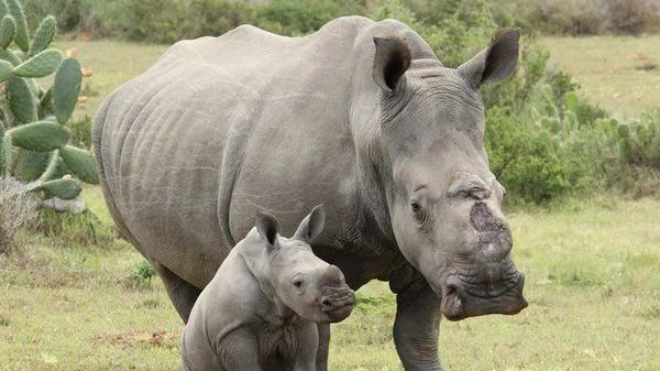 Petition · NZ House of Representatives: Urge decisive action by NZ Govt to save the Rhino from the threat of extinction · Change.org New Petition July 2016