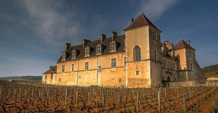 The King Of Burgundy: The Surprising History of Pinot Noir