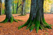 The Genealogy of Jesus - A Tale of Two Trees