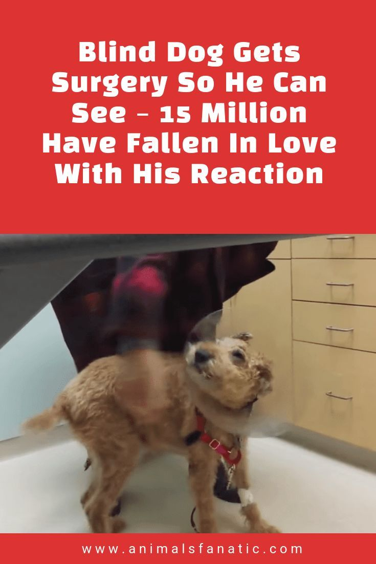 Blind Dog Gets Surgery So He Can See 15 Million Have Fallen In