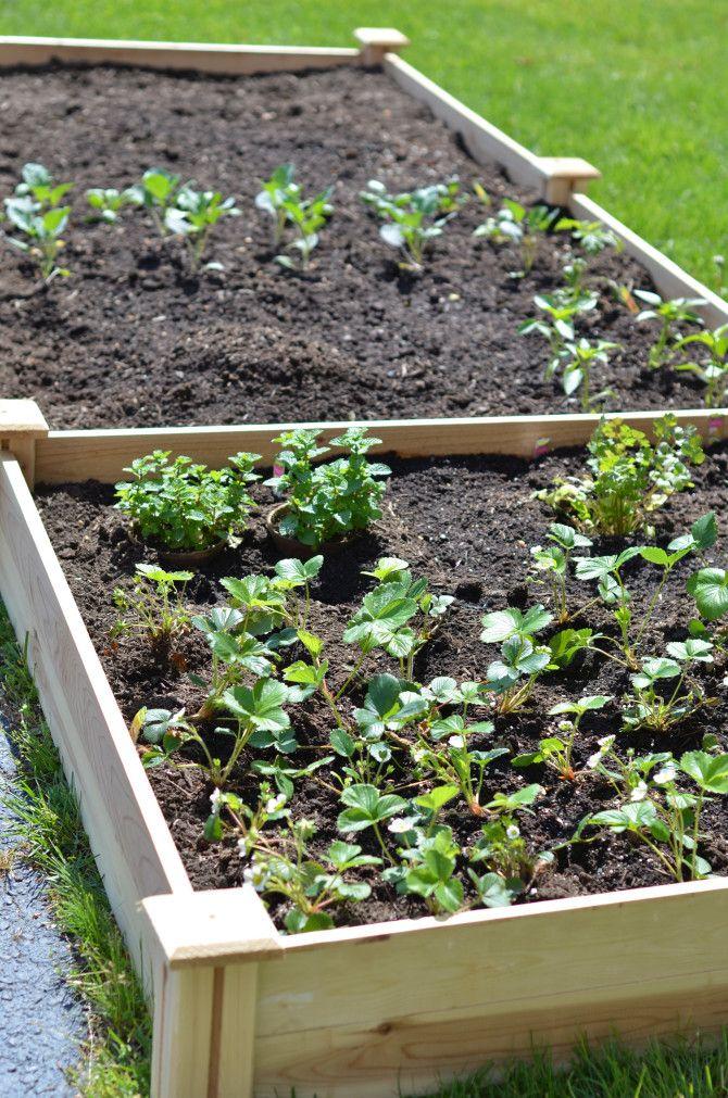 94 best images about raised garden on pinterest gardens for Unusual raised garden bed designs