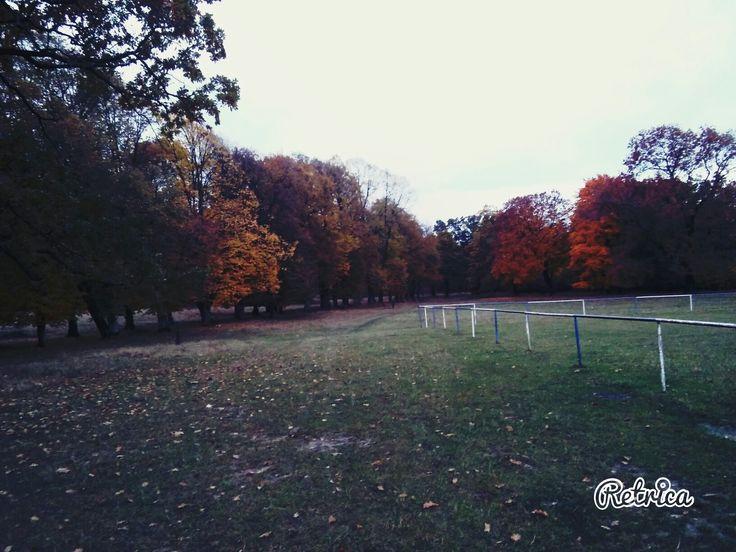 Fall 🍂🍁