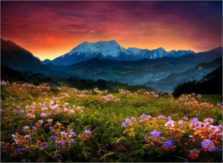 Alpe di Succiso   Beautiful places nature, Beautiful nature, Nature